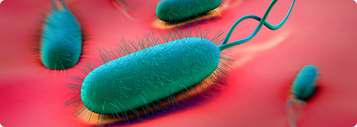 Helicobacter pylori: a bactéria que vive no estômago